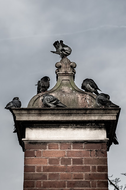 Blog - picture of Pigeons on Kensington High Street.