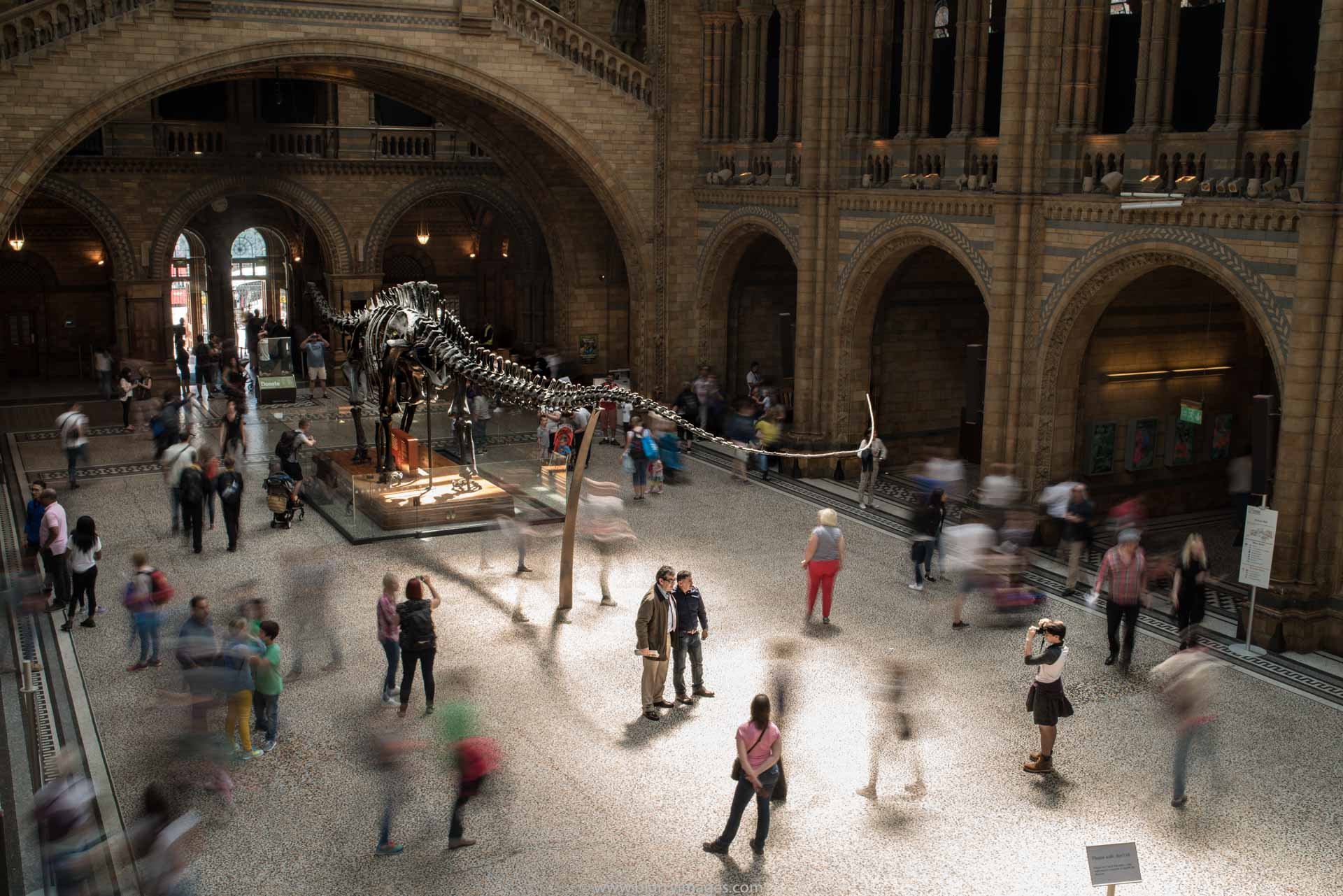 dinosaur's picture, visit in National History Museum, trip to National History Museum